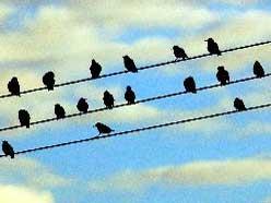 Warum Bekommen Vögel Keinen Stromschlag